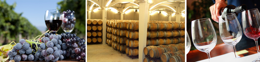 wine excursion2